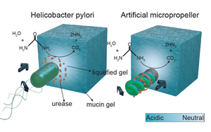 Enzymatically active biomimetic micropropellers for the penetration of mucin gels