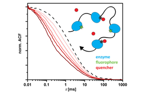 Diffusion Measurements of Swimming Enzymes with Fluorescence Correlation Spectroscopy