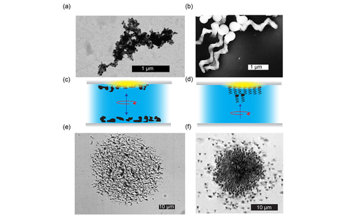 Pattern formation and collective effects in populations of magnetic microswimmers
