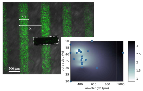 Gait learning for soft microrobots controlled by light fields