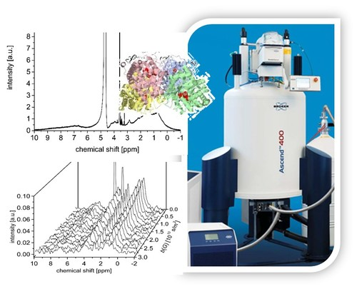 Absolute diffusion measurements of active enzyme solutions by NMR
